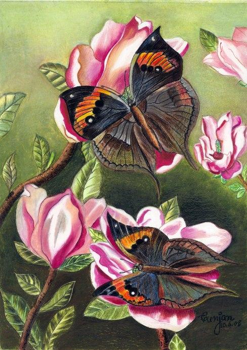 Butterflies .